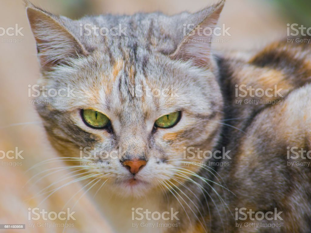 Cat sitting on a wooden bench close up royalty-free stock photo