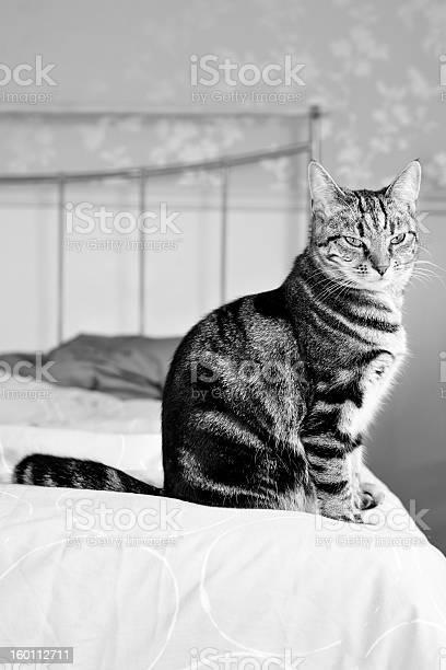 Cat sitting on bed picture id160112711?b=1&k=6&m=160112711&s=612x612&h=tp8guzc14vwz b5siwwbscq0zqtd6pjsgtnk uhqgk8=