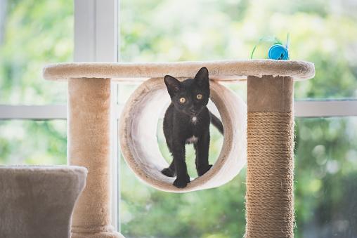Black cat sitting on cat tower