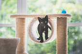 istock cat sitting on cat tower 927402366