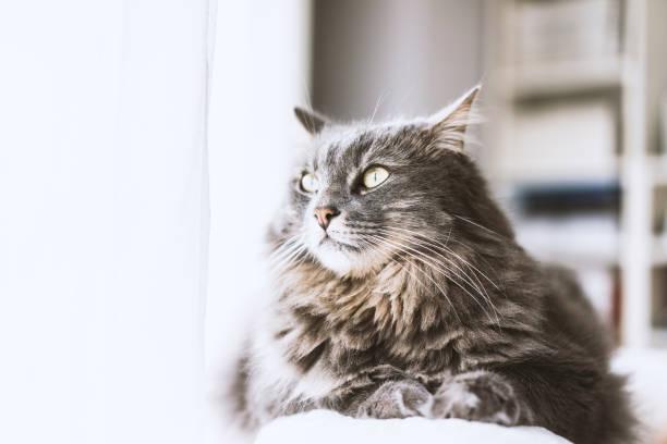 Cat sitting on couch picture id506284352?b=1&k=6&m=506284352&s=612x612&w=0&h=suxlodbebxvxdszoozmrnhtu0w9sbxu593ewixdxjxe=