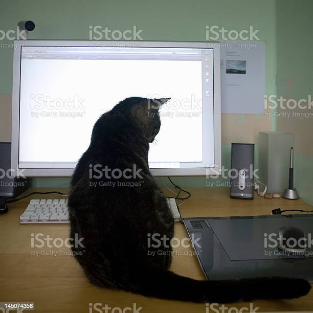 Cat sitting on desk looking at computer mouse picture id145074356?b=1&k=6&m=145074356&s=612x612&h=17g bdeyobgs92gu5f er4cwicz6g1hxkfog5xrlhgm=
