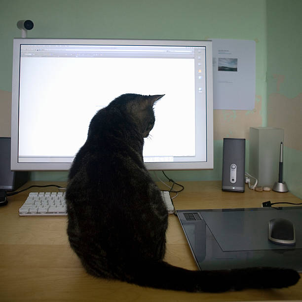 Cat sitting on desk looking at computer mouse picture id145074356?b=1&k=6&m=145074356&s=612x612&w=0&h=7nnmhixnuwl08blwhuzzy01pcgriebdtd1z6jy8grqe=