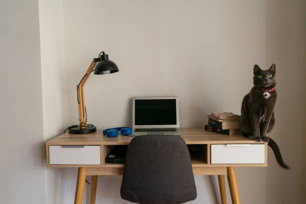 Cat sitting on home office desk picture id1096877876?b=1&k=6&m=1096877876&s=612x612&w=0&h=xhi2y9feghll96oldlh ngft4yruwb0uxqke6c0gk58=