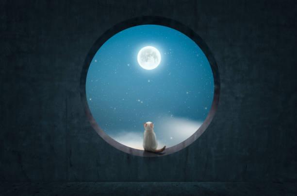 Cat sitting on rounded concrete window and look up to the moon picture id1220889304?b=1&k=6&m=1220889304&s=612x612&w=0&h=61o6ri7kew5vtkne2h8b9t3 meytua3jubq9rplhxxa=