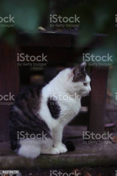 Photo of cat sitting on the bench on the garden and house background