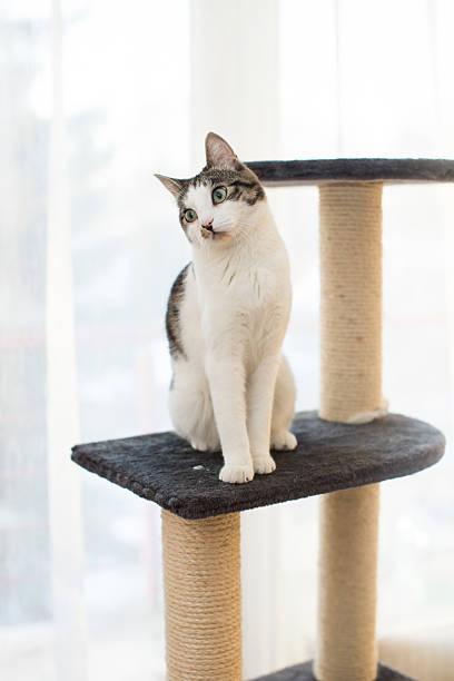 Cat sitting on the cats plush house picture id503190024?b=1&k=6&m=503190024&s=612x612&w=0&h=ockwesmcyrot20s3pxpsxn5xaqxl61qqikun q7pjt4=