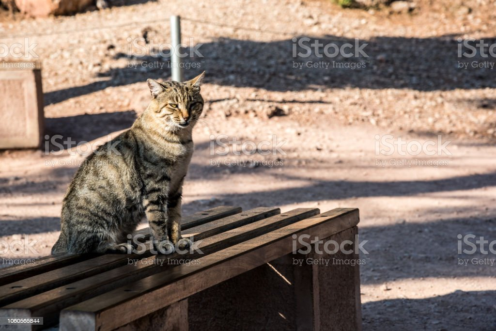 Pleasant Cat Sitting On The Garden Bench Stock Photo Download Image Now Inzonedesignstudio Interior Chair Design Inzonedesignstudiocom