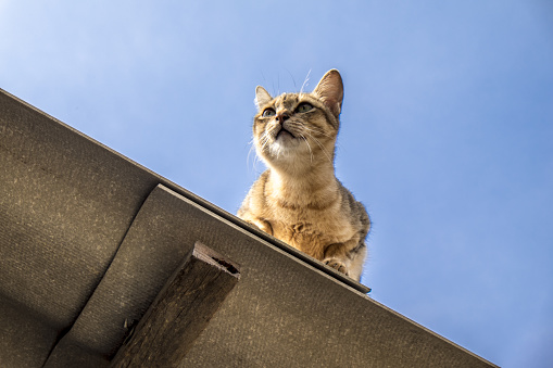 Cat sitting on the roof and Looking at the sky