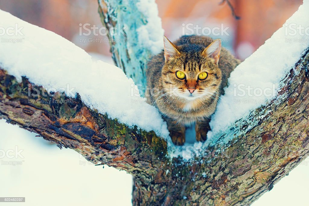 Cat sitting on the snowy tree stock photo