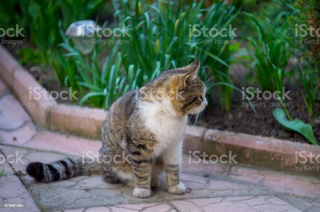 cat sitting on the tile in the garden with grass on background royalty-free stock photo