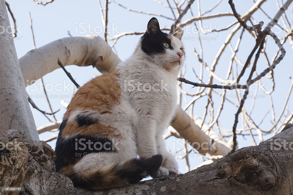 Cat sitting on the tree royalty-free stock photo