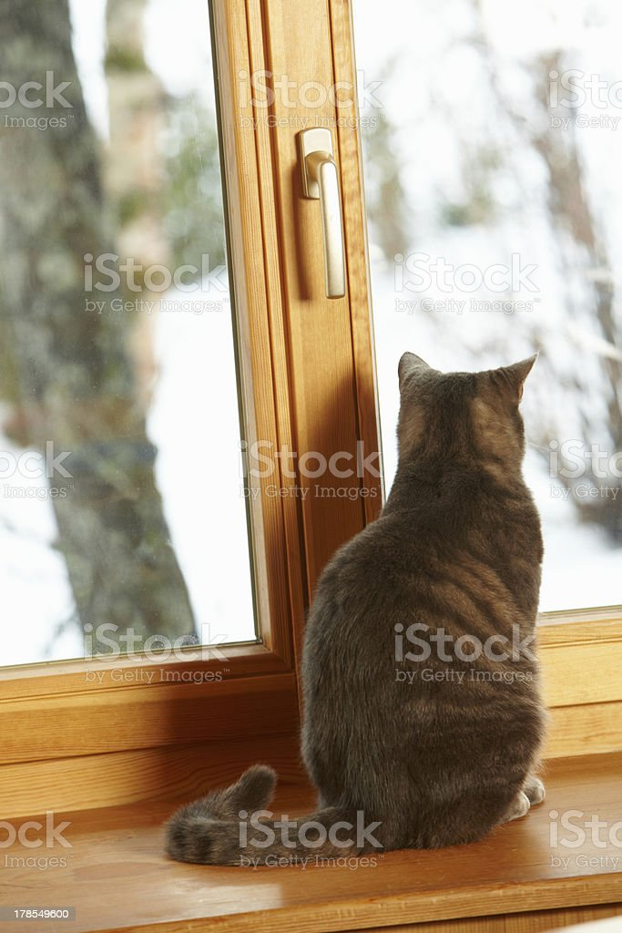 Cat Sitting On Window Ledge Looking At Snowy View stock photo