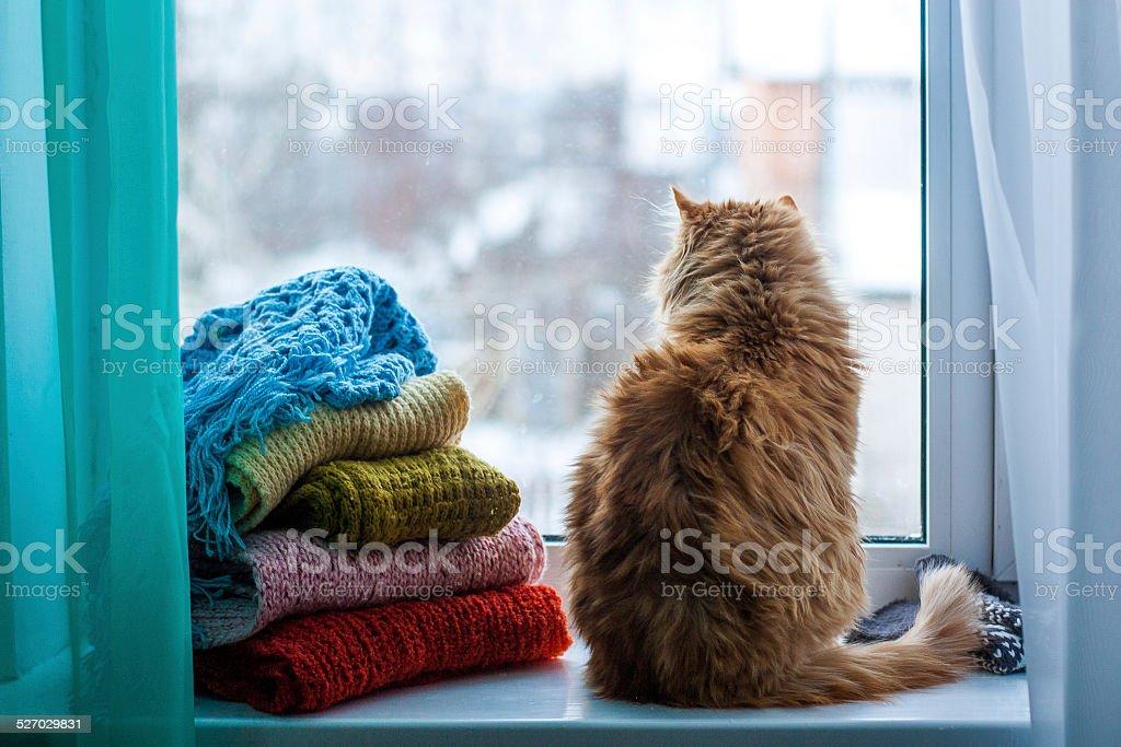 Cat Sitting On Window stock photo
