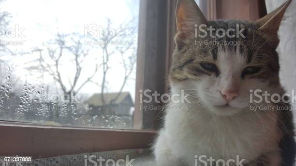Cat sitting on window picture id671337888?b=1&k=6&m=671337888&s=612x612&h= bihj8t j9yrgwxwj9izcm v5vij8bz4kwm6opjybyw=