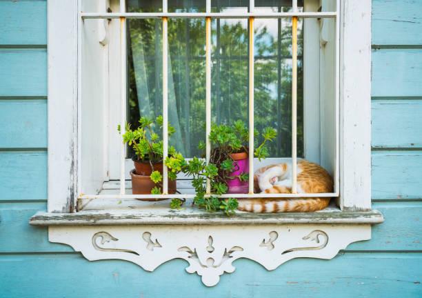 Cat sitting on window sill picture id1050930478?b=1&k=6&m=1050930478&s=612x612&w=0&h=kqcabkcyzw9yadtjby0ag wldjixhnqypfruev3nk6e=