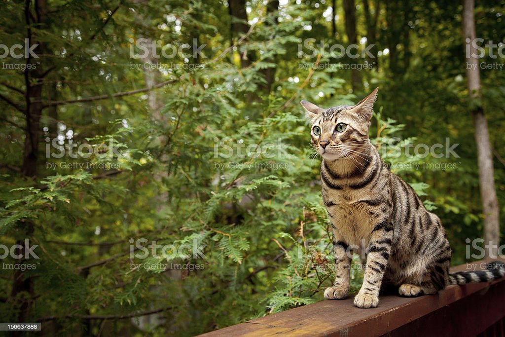 Cat sitting stock photo