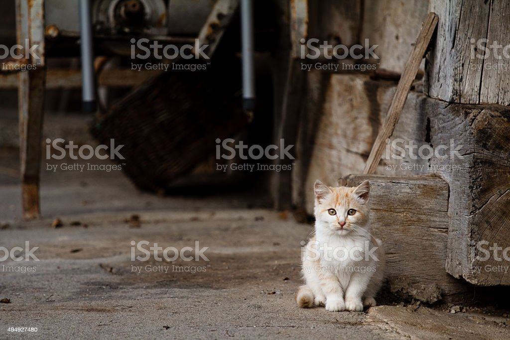 Cat Sitting stock photo
