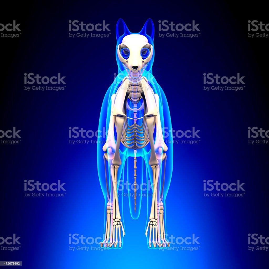 Cat Skeleton Anatomy Cat Skeleton Front View Stock Photo & More ...
