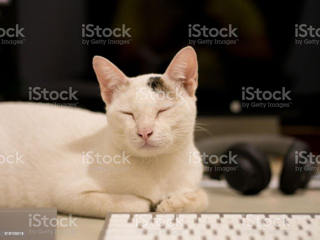 Cat Sleep behind Keyboard stock photo