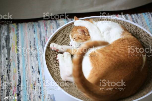 Cat sleep in fun face picture id1096717348?b=1&k=6&m=1096717348&s=612x612&h=z gc sad2cadviolbbdmvsz4nkrwqg6epn bj vr63y=