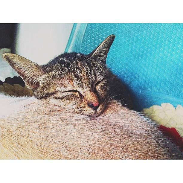 Cat sleep picture id451061319?b=1&k=6&m=451061319&s=612x612&w=0&h=ilvne0q32fa9qxufz58zh1vprjxphnrzezqunekn3c8=