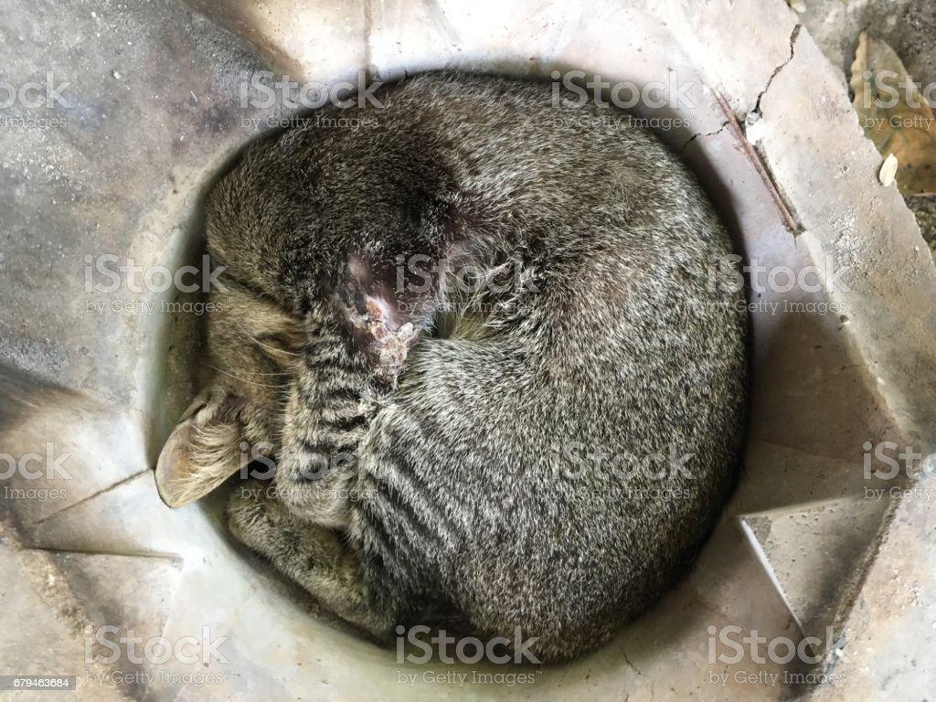 cat sleep royalty-free stock photo