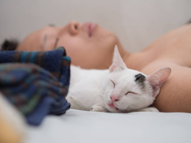 Cat Sleep with its Owner stock photo