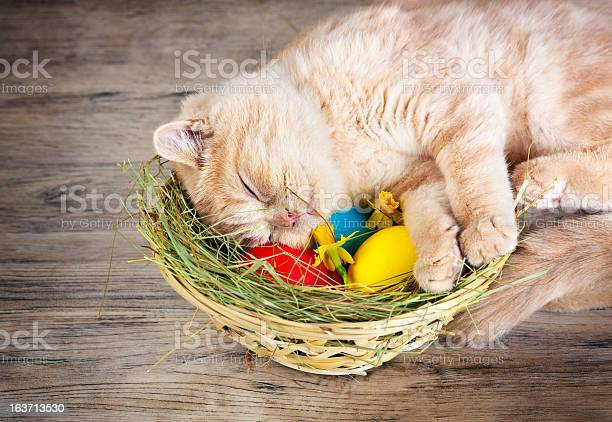 Cat sleeping at the basket with colored eggs picture id163713530?b=1&k=6&m=163713530&s=612x612&h=wgs9mfsjsfnko2frmughll1e12vf8yx fteyjfou1nq=