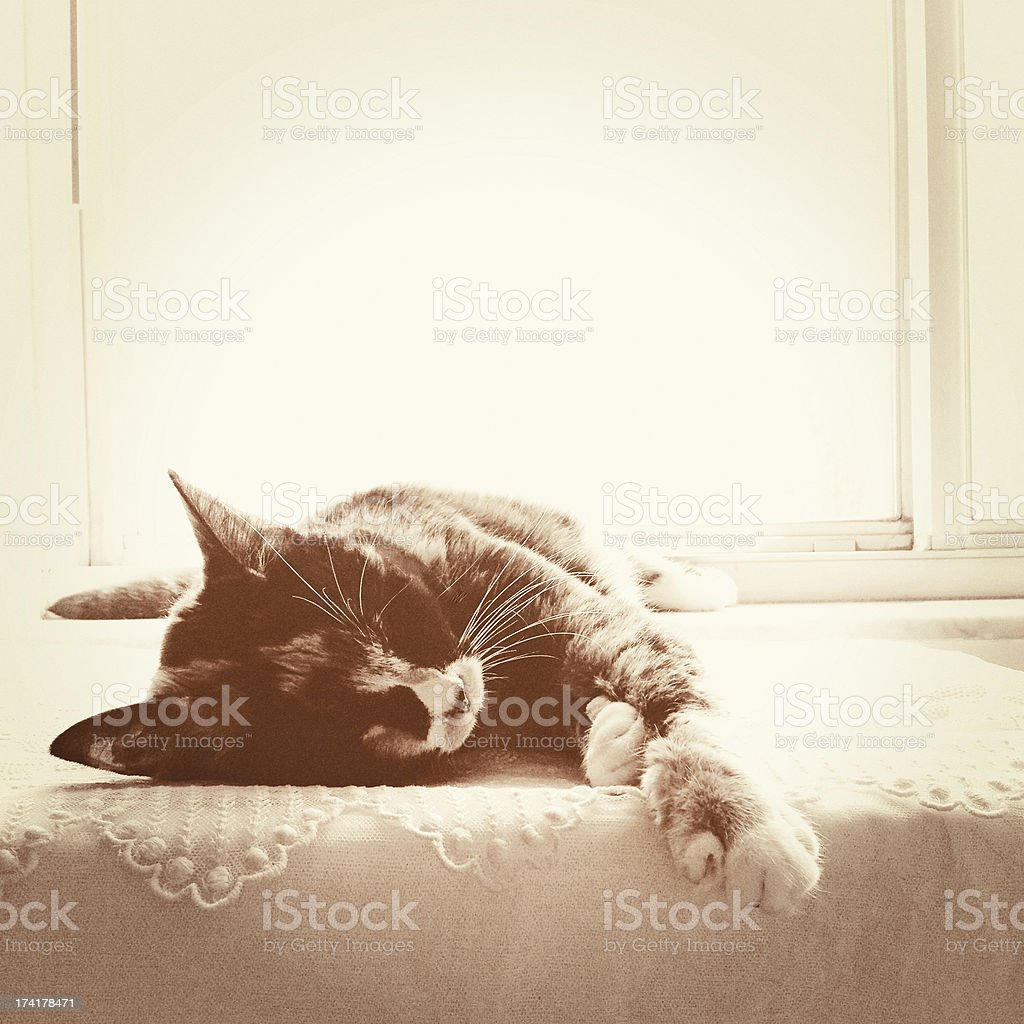 Cat Sleeping by a Window royalty-free stock photo