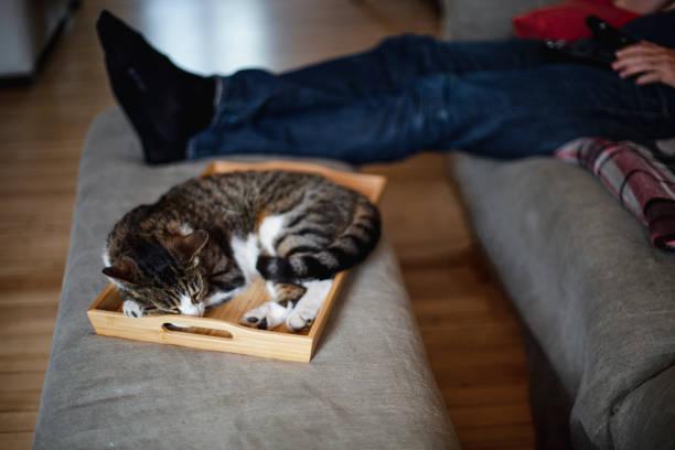 Cat sleeping in a tray picture id959938000?b=1&k=6&m=959938000&s=612x612&w=0&h=nnwquaav9a6qev 4ogg4qph4nw92acvgqsxhl8eode4=