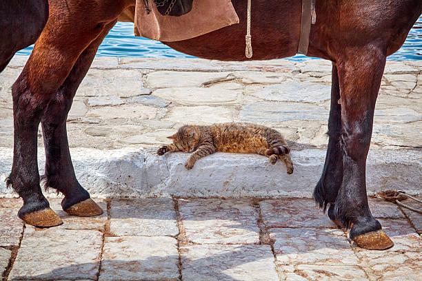 Cat sleeping in the shadow of a donkey - foto de acervo