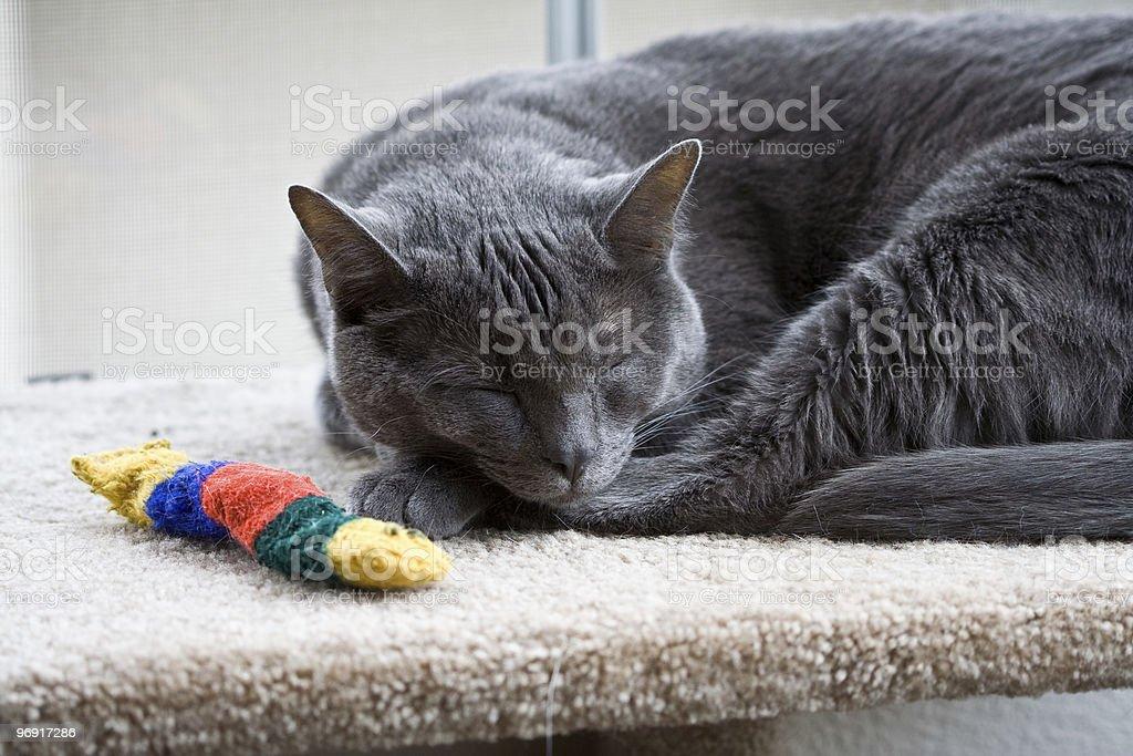 Cat Sleeping in Window royalty-free stock photo