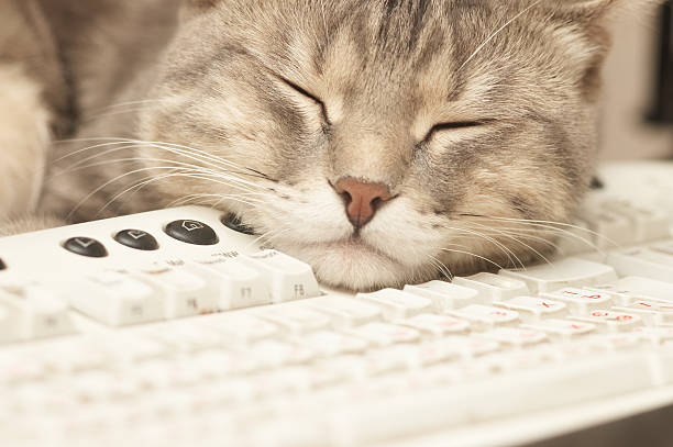 Cat sleeping on a computer keyboard picture id156212461?b=1&k=6&m=156212461&s=612x612&w=0&h=u1bf44yltrx84obaoq8jaddy4  stqfmabcxay64 6y=
