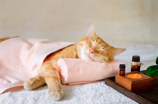 A cat sleeping on a massage table while taking spa treatments.