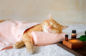 istock A cat sleeping on a massage table while taking spa treatments 1273269534