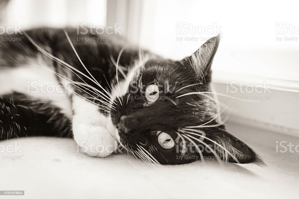 Cat sleeping on a window sill stock photo