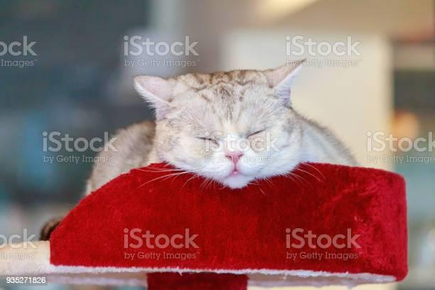 Cat sleeping on bed picture id935271826?b=1&k=6&m=935271826&s=612x612&h=dbzy8jahatqd6inrjao1spysuyv5nfrnwqui2qpcvzu=