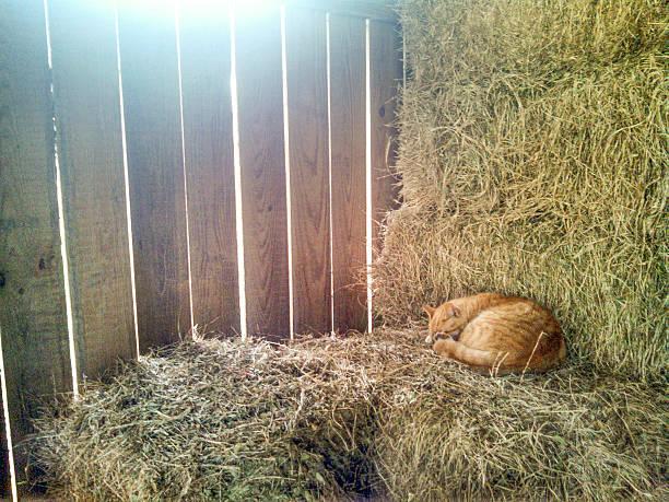 cat schlafen auf hay - traumscheune stock-fotos und bilder