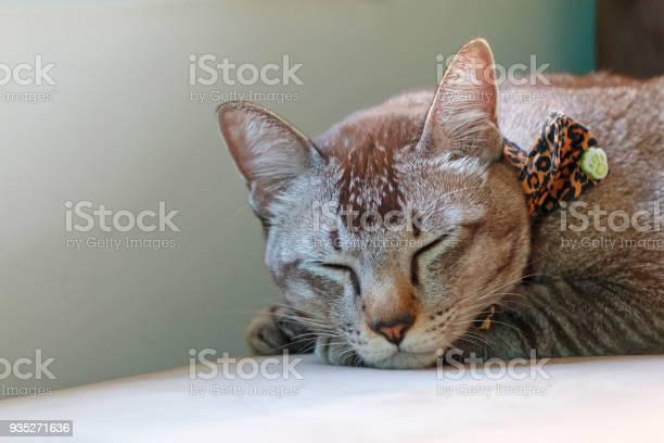Cat sleeping on sofa picture id935271636?b=1&k=6&m=935271636&s=612x612&h=9bhg3vfn9qxwkrmrb72w7gpazv67svuz67cbhtqhxju=