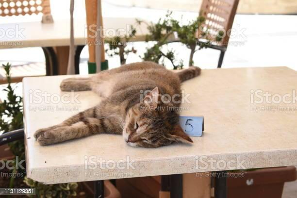 Cat sleeping on table in restaurant picture id1131129351?b=1&k=6&m=1131129351&s=612x612&h=t5ak1st5lxfaqfgaiqen9aqzumutm1 92dm9ljzvsha=