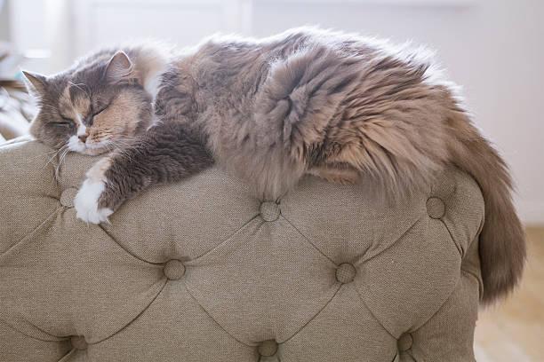 katze auf der couch schlafen - hunde träger stock-fotos und bilder
