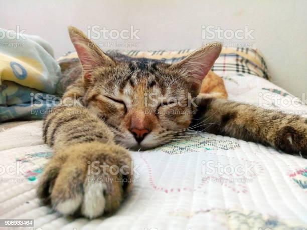 Cat sleeping on the couch picture id908933464?b=1&k=6&m=908933464&s=612x612&h=b8hbustie66mycljiwjp87fqhqqvmgj3wt3fgg6a0ya=
