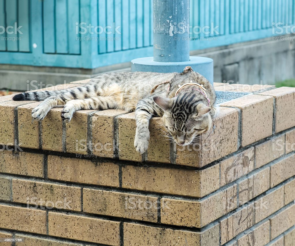Cat Sleeping on The Grunge Brick Stone Pillar for Relaxing stock photo