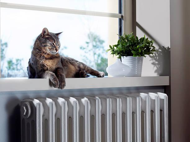 cat sleeping on the heater - katt inomhus bildbanksfoton och bilder