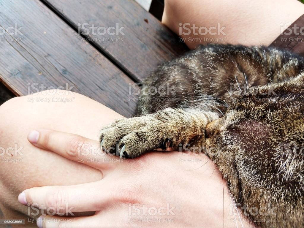 Cat sleeping on the person. zbiór zdjęć royalty-free