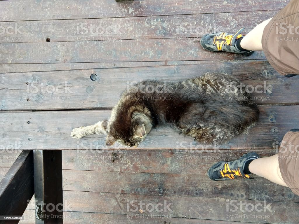 Cat sleeping on the person. royalty-free stock photo