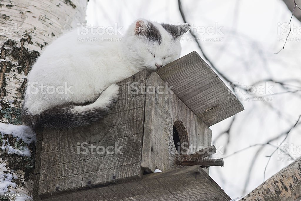 Cat sleeping on top of a birdhouse royalty-free stock photo