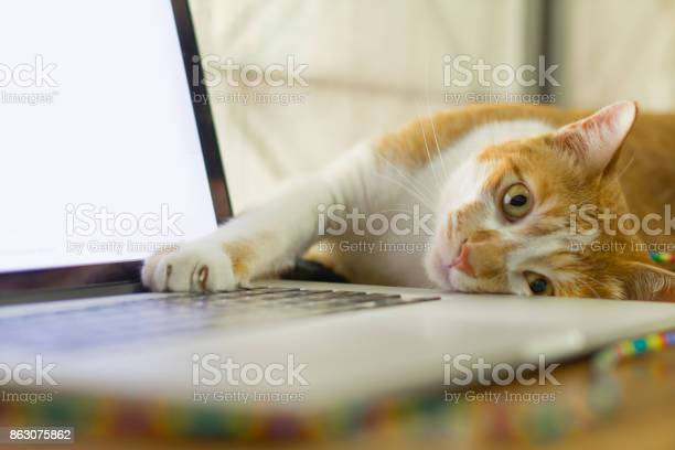 Cat sleeping over a laptop on wooden desk with sunrise background picture id863075862?b=1&k=6&m=863075862&s=612x612&h=9ijgdlwue4wdu62zcqv83r3h0ubujjchhx2dtzpahko=