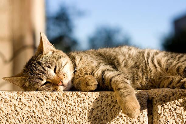 Cat sleeping picture id470642774?b=1&k=6&m=470642774&s=612x612&w=0&h=m3o6c1b c9ecv5ggrixp95m  0tclzph9ijptahokla=